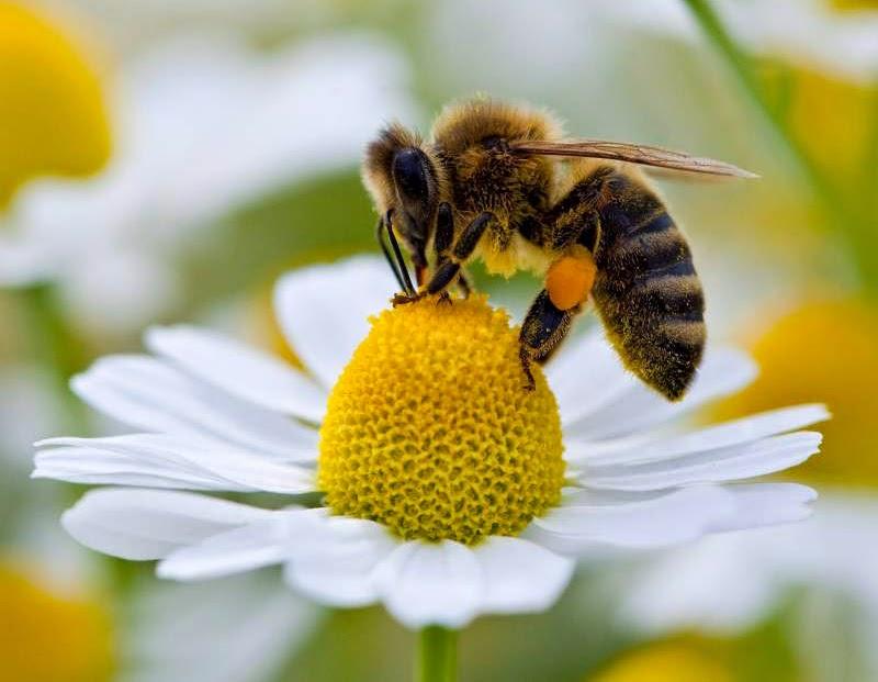Leve de bijen.be