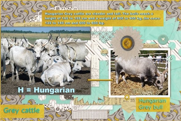 Aug.2016 - H = Hongary Grey cattle - Lo 3