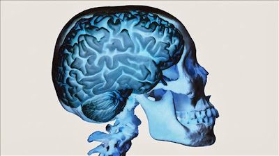 Top Brain, Bottom Brain: Surprising Insights Into How You Think: Business Brains