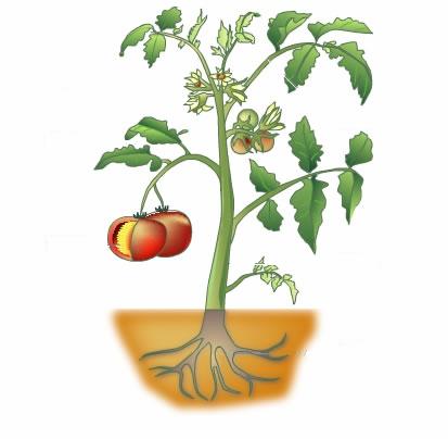 el mundo sin las plantas: