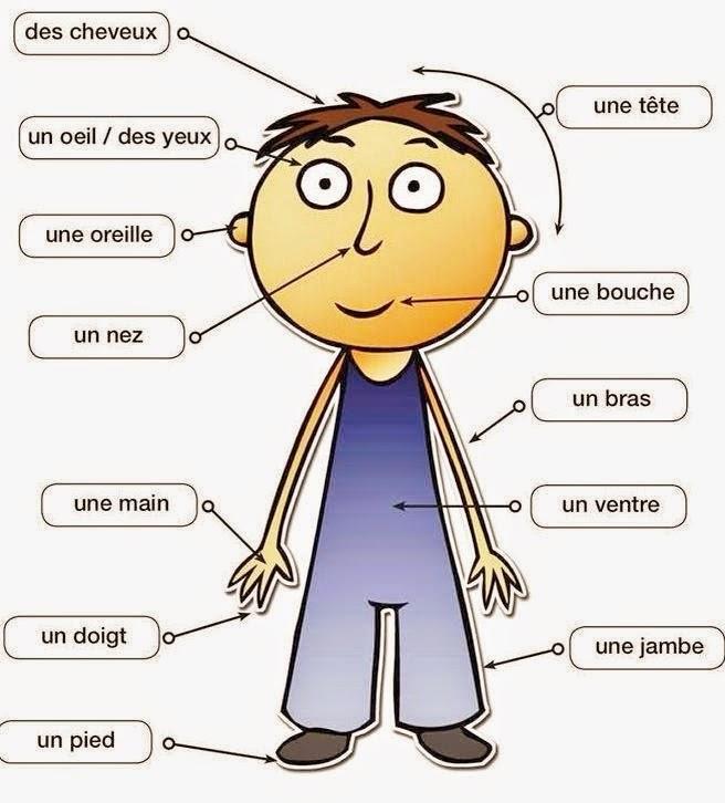 fran u00c7ais langue etrangere  a la pharmacie