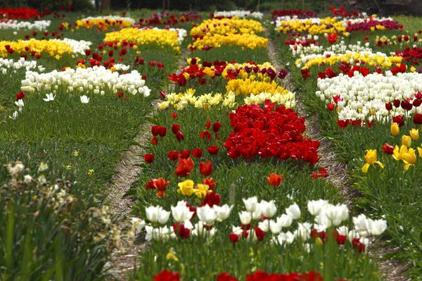 Brick Edging For Your Flower Beds1