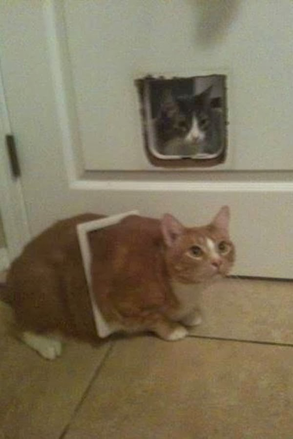 Funny cats - part 89 (40 pics + 10 gifs), fat cat stuck on cat's door and destroy it