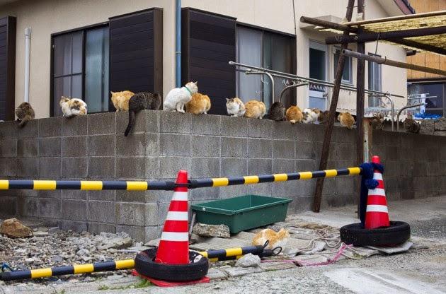 Grande numeros de gatas