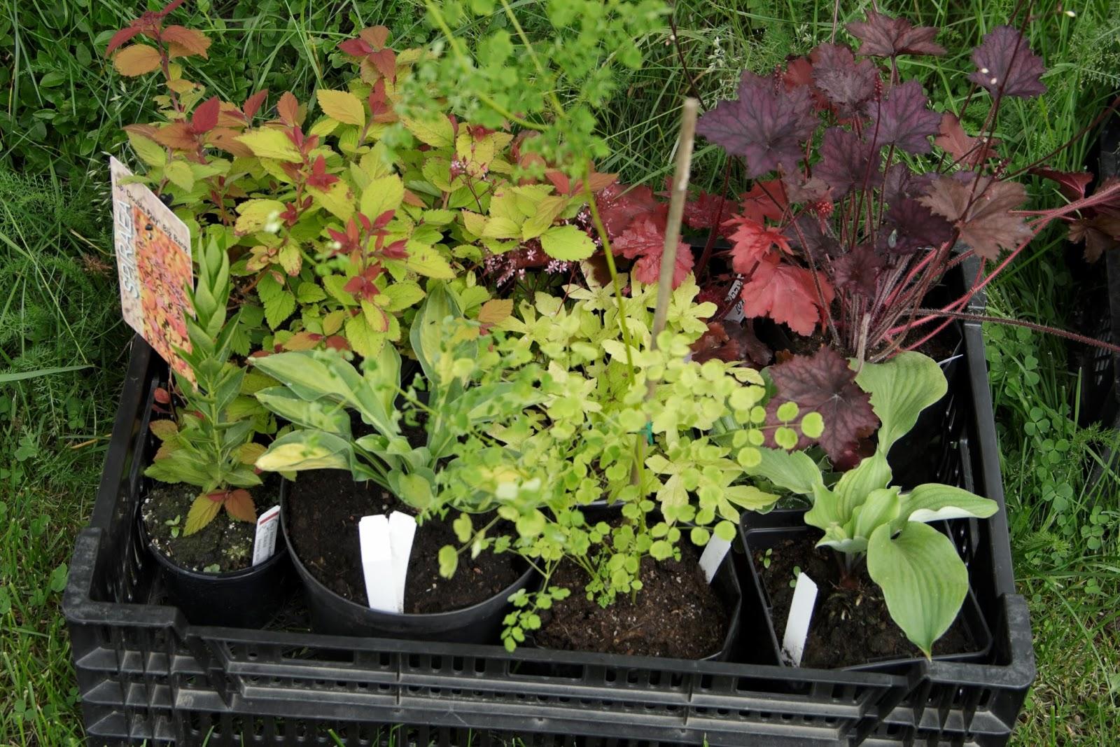 Visningsträdgården hällans trädgårdsblogg: vargviksgården i burträsk