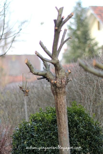 Ein Schweizer Garten: Der März ist geschafft!