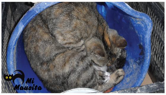 gatitos-recien-nacidos