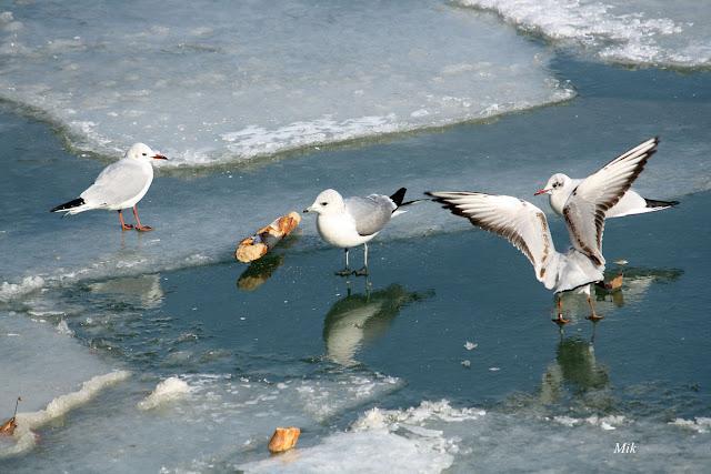 hiver 2011 lyon