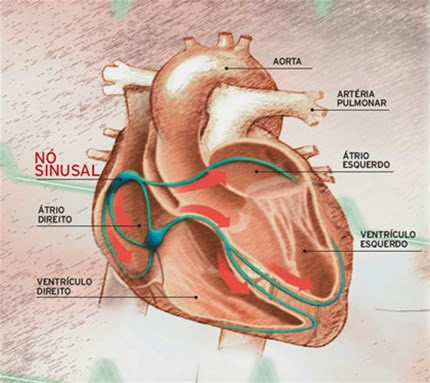 Aprenda a identificar os sinais que o coração da, quando algo não está bem...