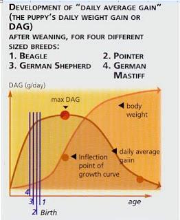 Tăng trọng bình quân trên ngày ở một số giống chó.