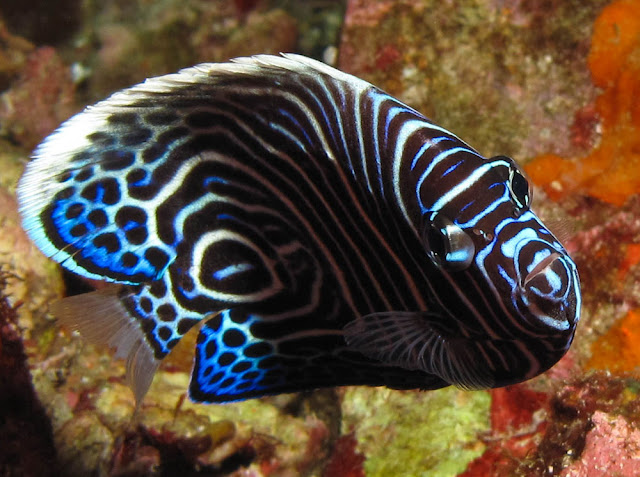 The most fascinating fish in to the sea waters