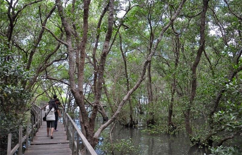 Wisata Unik Di Hutan Mangrove Surabaya