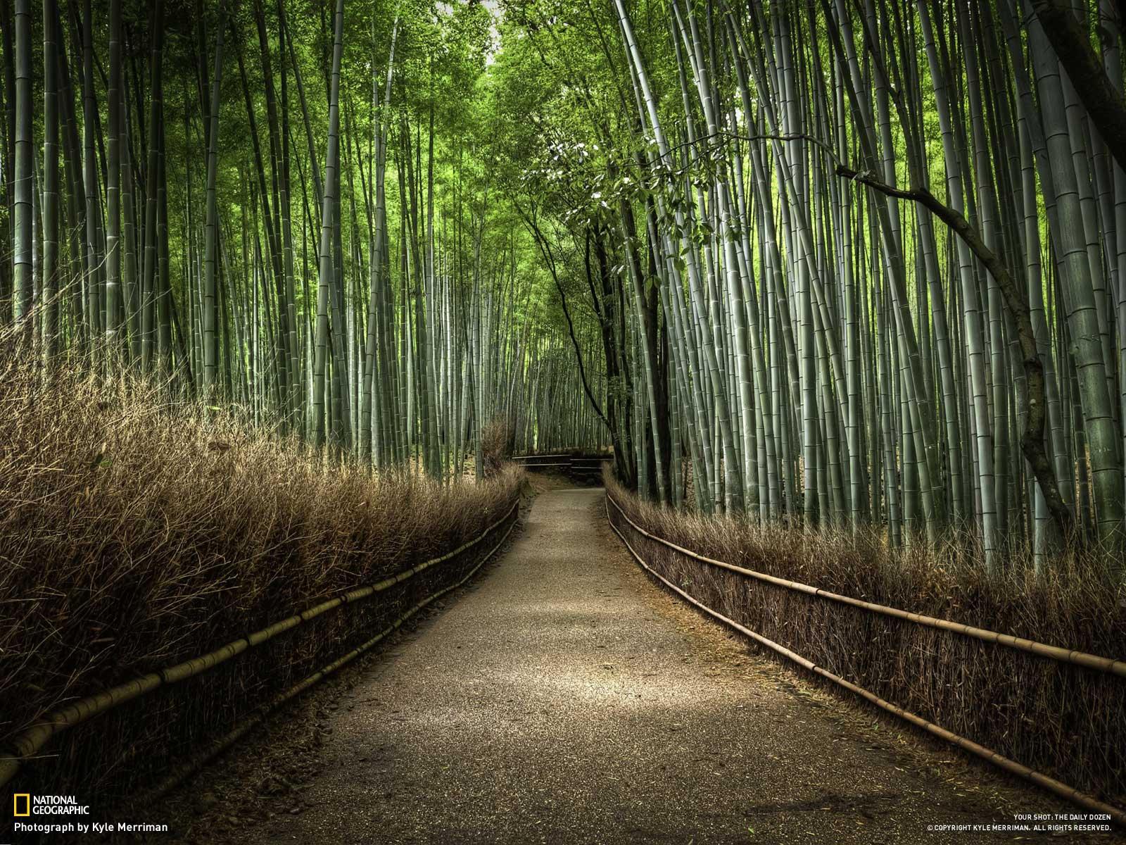 Foto Indahnya Pemandangan Alam Planet Wallpapers Foto Foto
