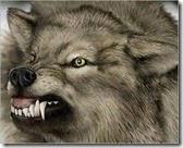 قصيدة أديب والذئب
