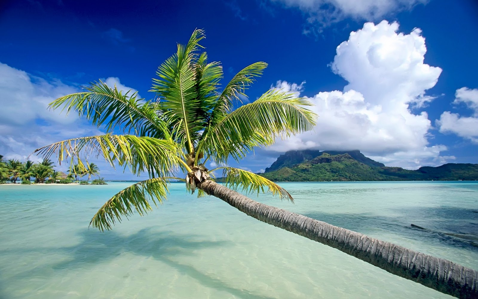 Beautiful tropical beach photos
