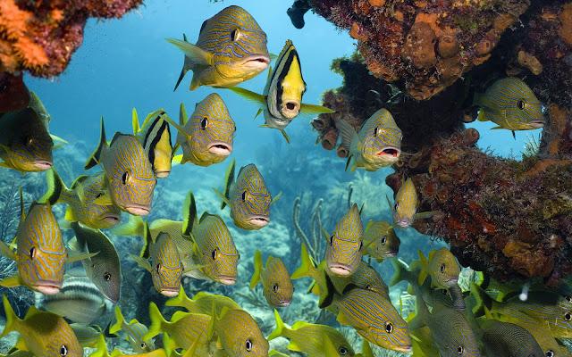 Imagenes de Peces Estraños y raros en Arrecifes de Coral