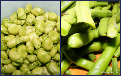 Preparing Bakla, Broad Beans