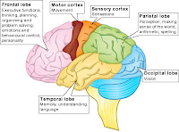 Brain Functions Diagram