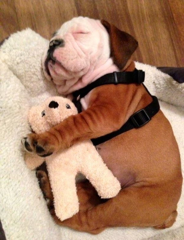 Cute dogs - part 24 (50 pics), cute dog pictures, funny dog picture, dog photos