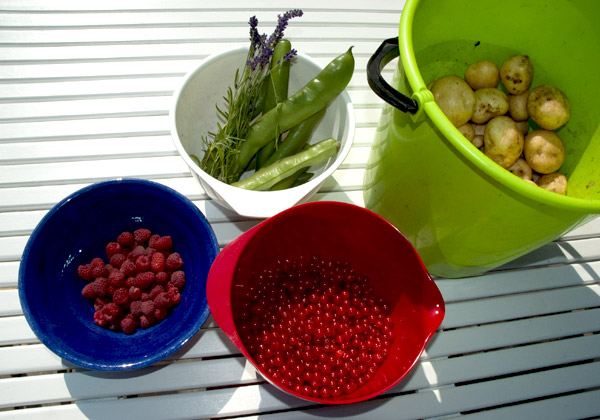 Skål med hallon, bunkar med bondbönor, vinbär och lavendel och en hink med potatis.
