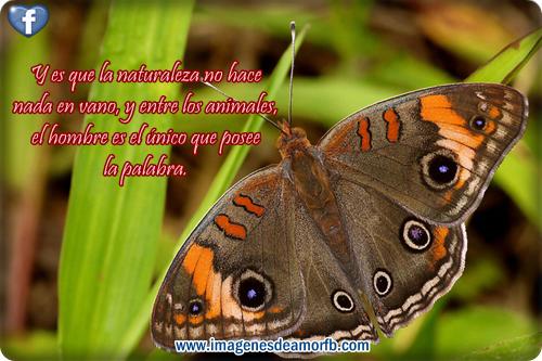 Imágenes con frases a la naturaleza ~ Imagenes de amor con frases ...