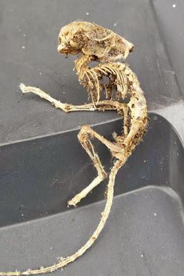 Παράξενος σκελετός βρέθηκε κάτω από ντουλάπι κουζίνας
