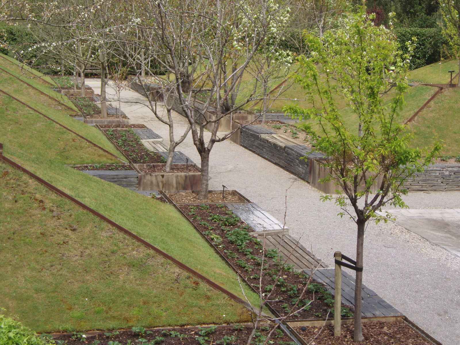 Metido en jardines poda de rboles frutales iii poda de for Arboles frutales para jardin