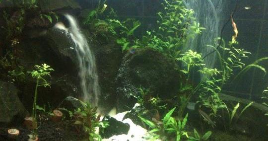Cara Buat Air Terjun Aquascape Sederhana | Aqua Scap
