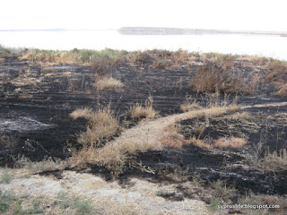 Salt Lake trail fire in Larnaca