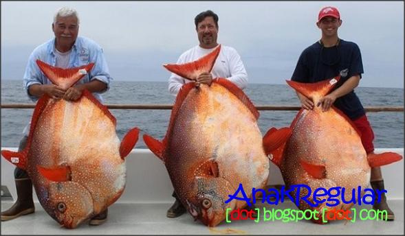Mengenal Opah Ikan Laut Berdarah Panas Pertama Di Dunia