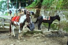 Mirik Tourism Center to get horse stable