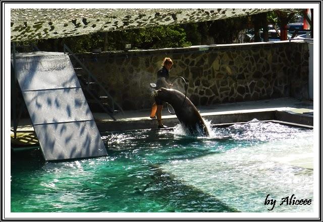 foci-zoo-Nyiregyhaza