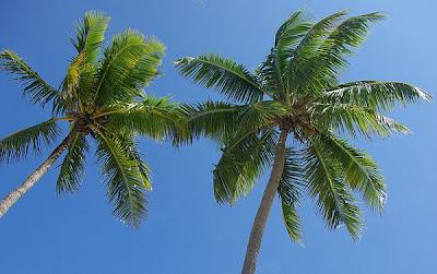 Un árbol llamado palmera