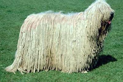 anjing unik