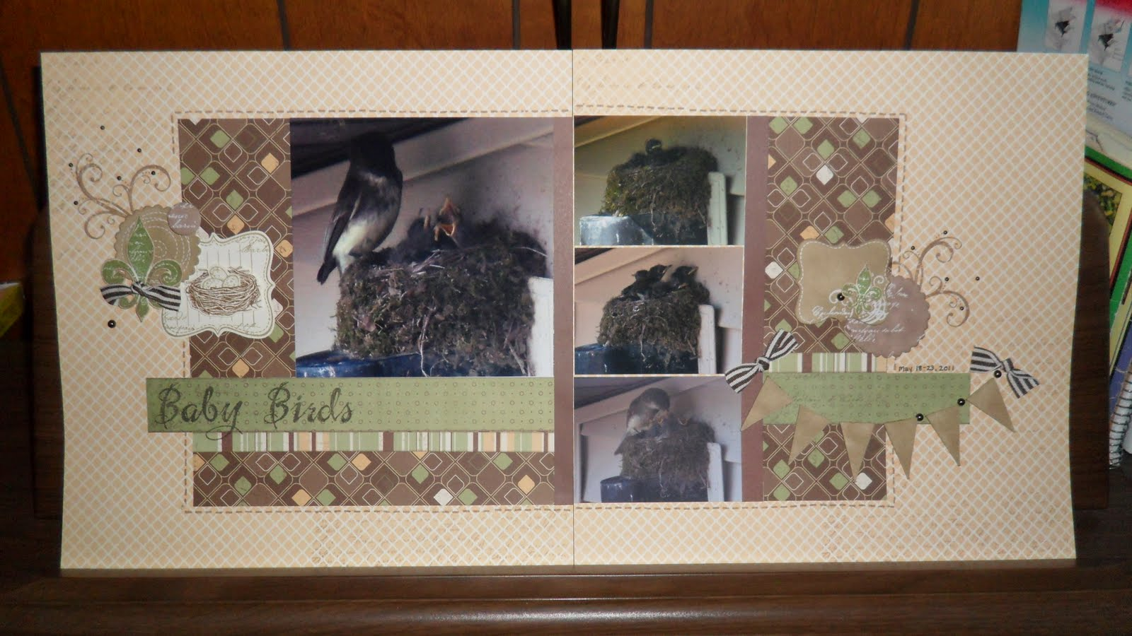 Baby Birds Layout1600