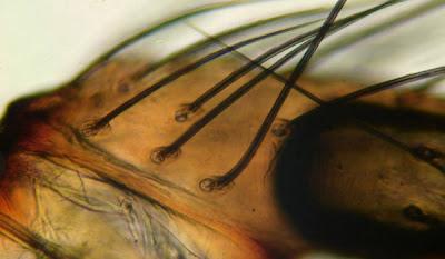 Imagenes del mundo microscopico