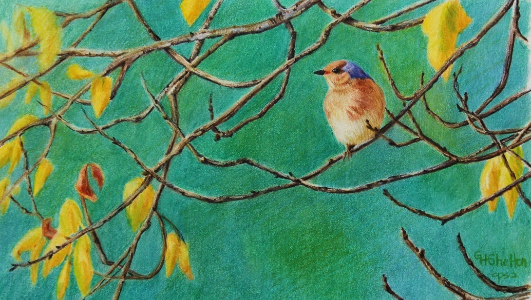Bluebird Day