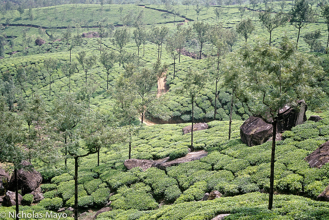 visit munnar: contact us