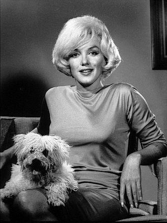 mascotas de Marilyn Monroe maf