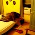 Tổng hợp các clip chó hiếp dâm người - Clip Shock