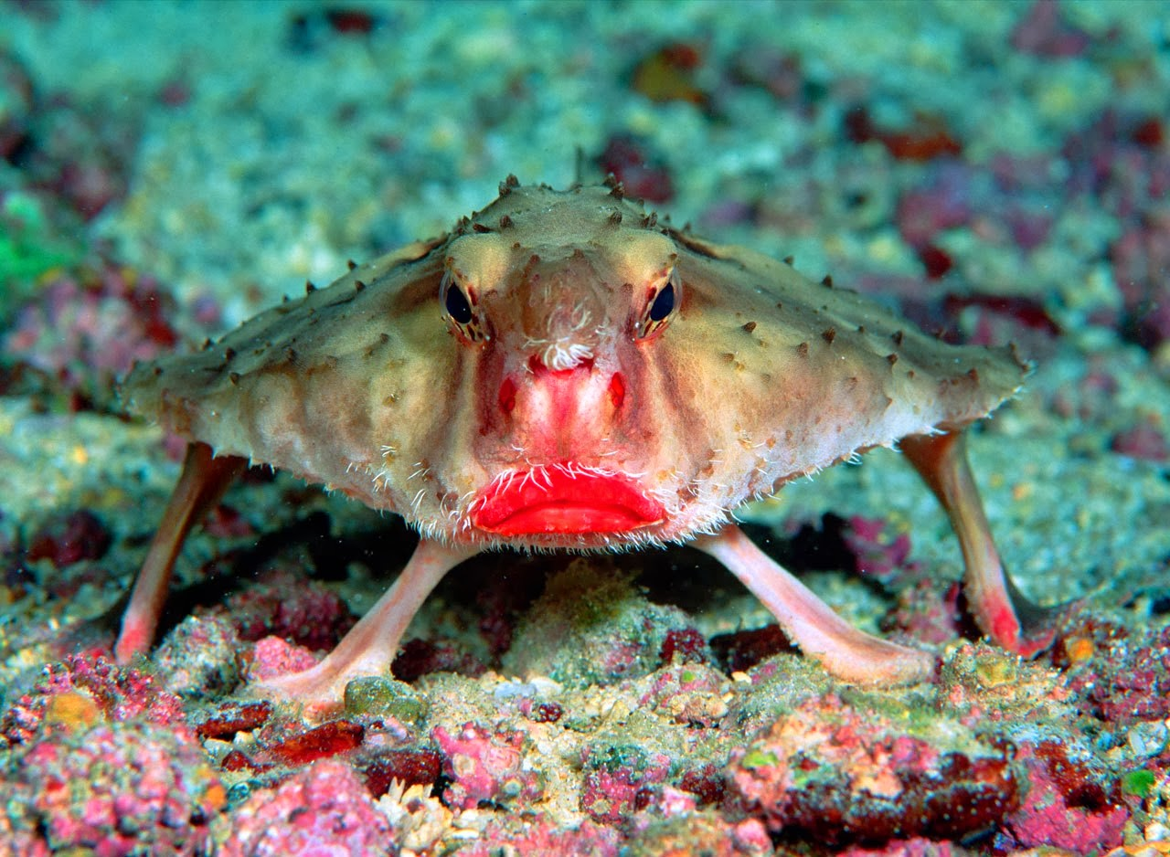 Most Amazing Facts About Strange Fish Species in the World