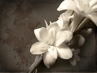 Beautiful White Flower Love Wallpaper