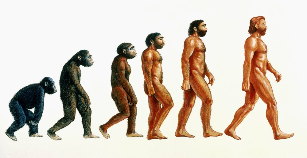 Evolutionsteorien