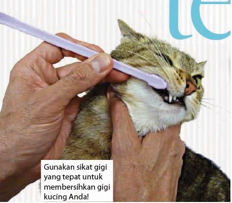 perawatan gigi kucing
