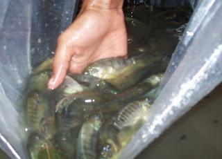 bagful of fish