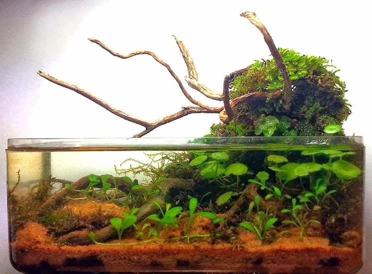 Aquascaping spain mariah by jose carlos osete flores - Aquascape espana ...