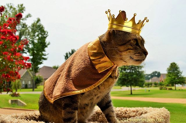 Wearing Viking cape only, Frank puts on a crown and becomes King of His World