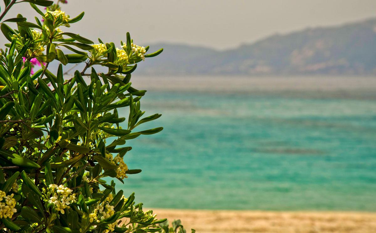 Mini-ghid de vizitat Corsica