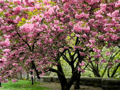 Spring Riverside Park New York City