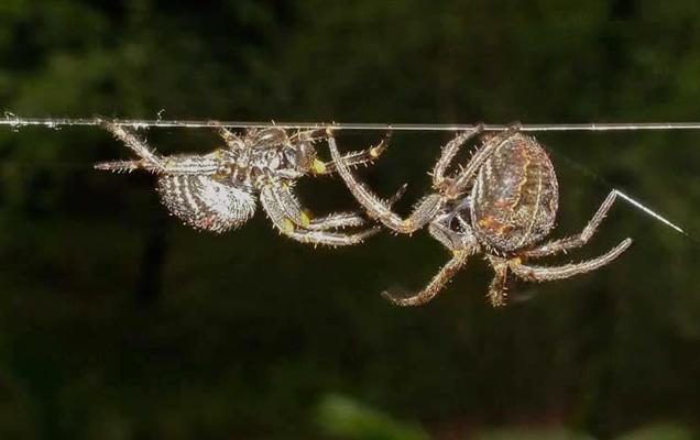 Οι αράχνες και η διατήρηση της ειρήνης... (Η Φύση διδάσκει)